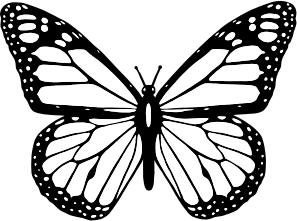 Black-And-White-Butterfly-300px
